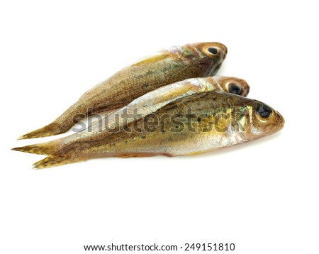 Eurasian Ruffe (Gymnocephalus cernuus) freshwater fish on a white background - stock photo