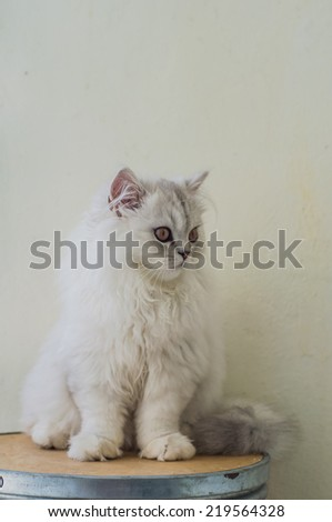Euro Cat - stock photo