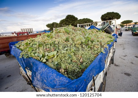 europe, italy, sicily, marsala, trucks with grapes during the harvest - stock photo