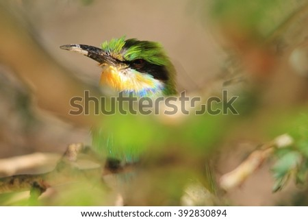 European Bee-eater - African Tropical Wild Bird Background - Elegant Green