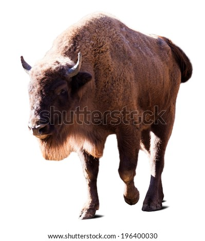 European bison. Isolated over white with shade - stock photo