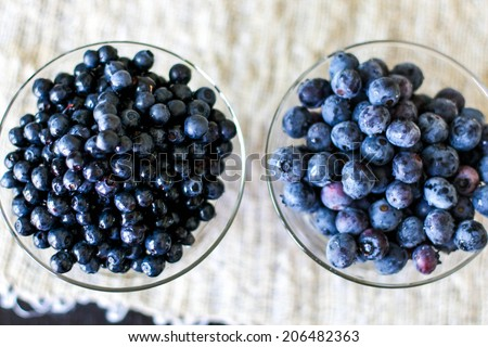 European blueberries and american blueberries