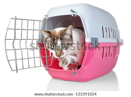 European cat in cage licking his paw. On a white background. - stock photo