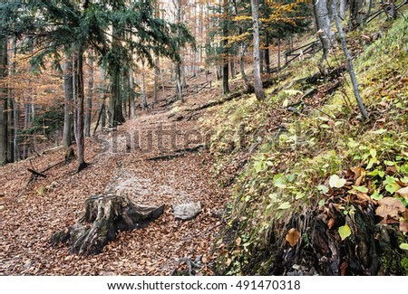 European deciduous forest with cracked brown leaves in autumn. Seasonal natural scene. Beauty in nature. Vibrant colors.