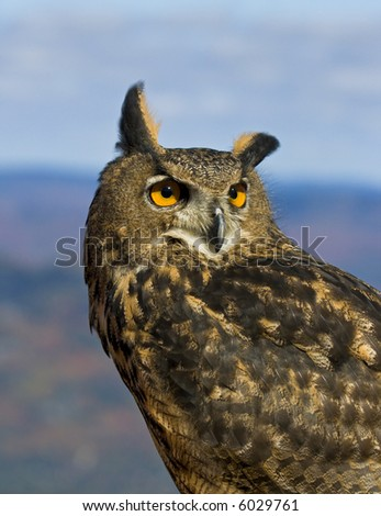 European eagle owl - stock photo