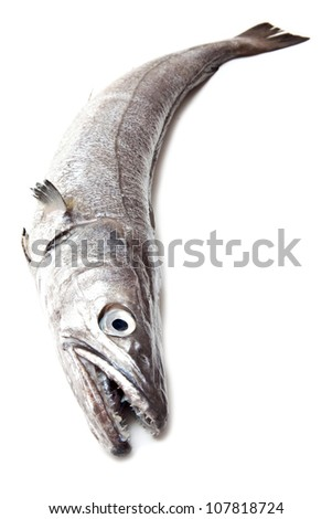 European Hake fish isolated on a white studio background. - stock photo