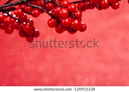 european holly on red background (shallow DOF) - stock photo