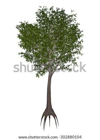 European or common ash, fraxinus excelsior tree isolated in white background - 3D render - stock photo