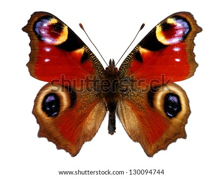 European Peacock butterfly (Inachis io) - stock photo