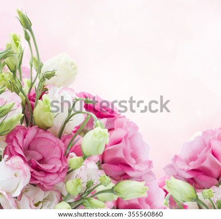eustoma flower meadow with pink bokeh copy space - stock photo