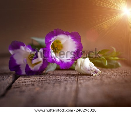 Eustoma on old wooden table - stock photo