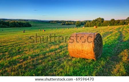 Evening field - stock photo