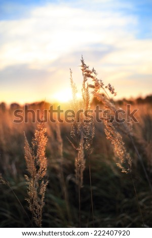 Evening field bathed in sunlight - stock photo