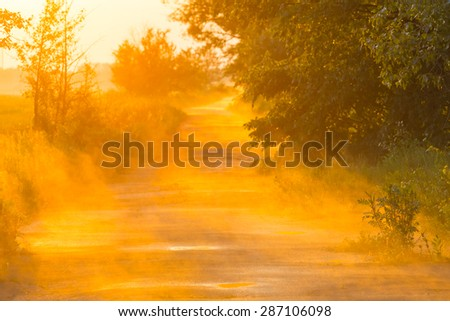 evening forest road in a mist - stock photo