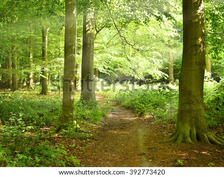 Evening in a forest with little, natural footpath and sunbeams. Mixed forest in spring with fresh leaves and smooth sunlight. - stock photo