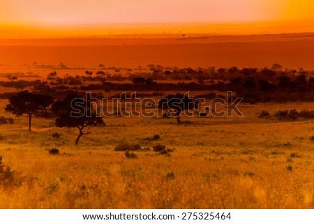 Evening in savanna, Kenya, Africa (tone correction) - stock photo