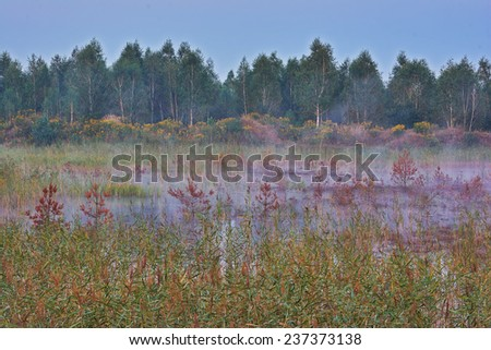 Evening landscape - fog over the marsh, reed in the foreground, forest background - stock photo