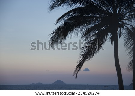 Evening landscape with a palm tree on the beach - stock photo