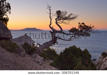 Evening Landscape with a tree on a cliff. View of the sea and sunset sky. Crimea - stock photo