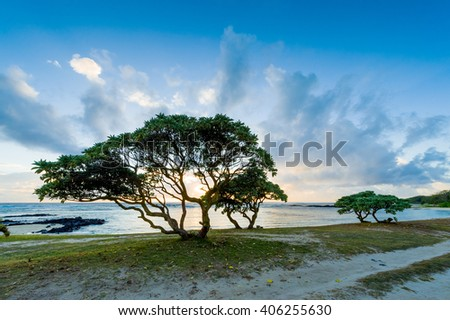 Evening landscape with trees on the shore of the ocean. Mauritius Island