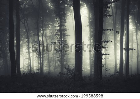 evening light in a dark misty forest - stock photo