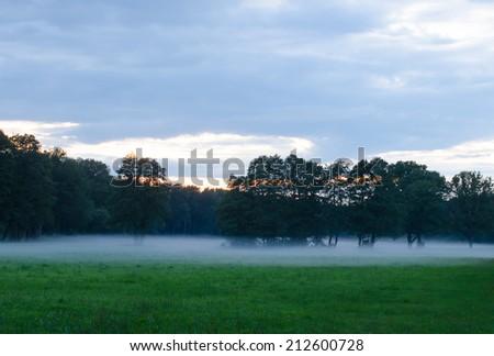 evening mist, pasture - stock photo