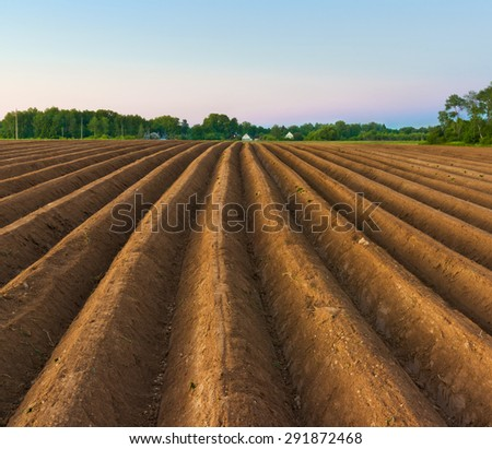 Evening scene in countryside. Potatoes field after mechanized hilling - stock photo