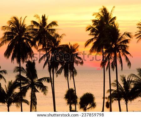Evening Scene Sunset Divine  - stock photo