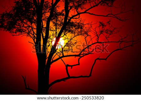 Evening scene with sunset sun and tree - stock photo