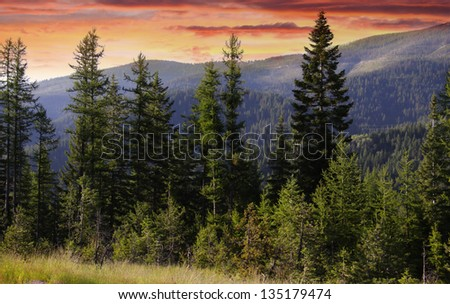 Evening sky and pine trees  in Glacier national park - stock photo