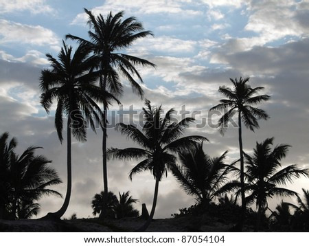 evening sky with palm tree silhouettes at the Dominican Republic, a island of Hispanola wich is a part of the Greater Antilles archipelago in the Carribean region - stock photo