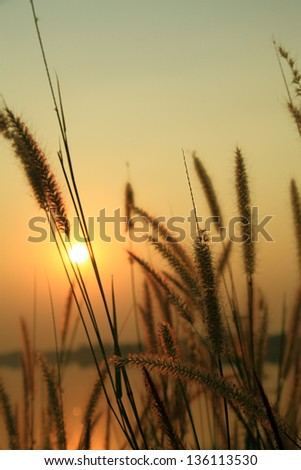 Evening sunset with grass blossom foreground over Laos at left side of Khong river as shot from Thailand.