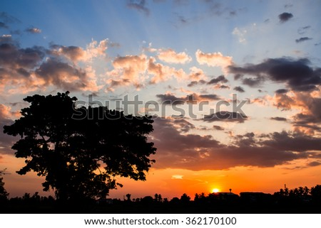 Evening,The one tree before the sunset - stock photo