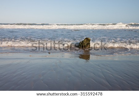 evening tide rushing past ancient tree stump embedded in sand at Pouawa, Gisborne, East Coast, North Island, New Zealand  - stock photo
