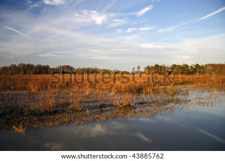 Everglades Landscape - stock photo