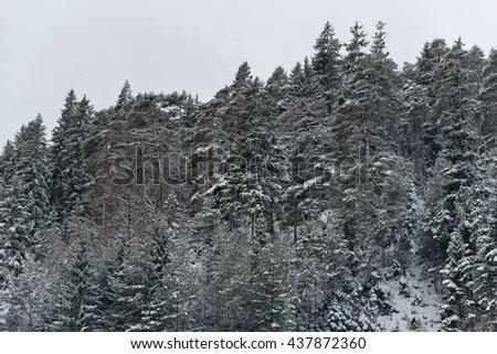 Evergreen and other trees standing along hillside with sprinkling of snow on their leaves under cold winter sky - stock photo