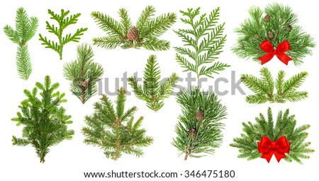 Evergreen coniferous tree branches isolated on white background. Christmas decoration with red ribbon bow - stock photo