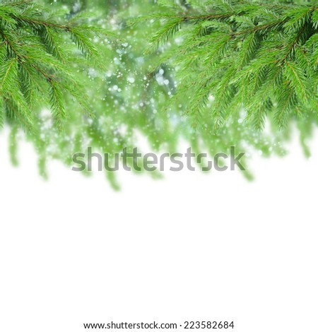 evergreen fir tree border isolated on white background - stock photo