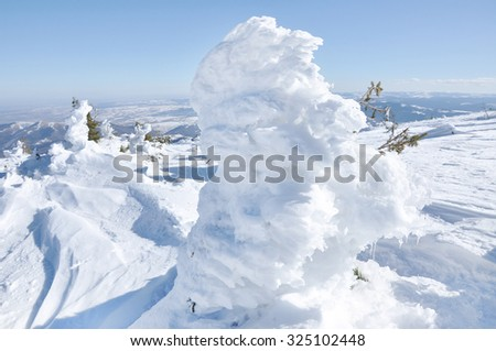 Evergreen fir tree covered by snow - stock photo