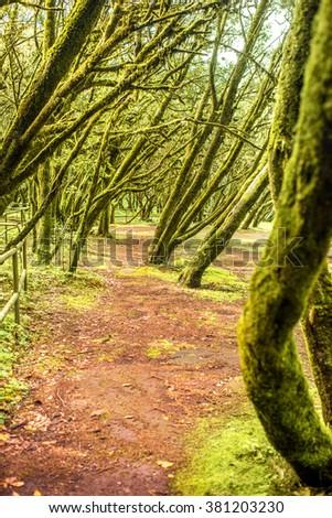 Evergreen forest in Garajonay national park on La Gomera island in Spain - stock photo