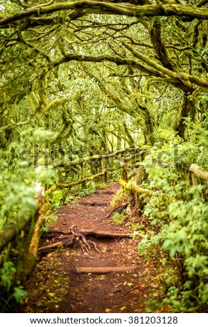Evergreen forest in Garajonay national park with tourist footpath on La Gomera island in Spain - stock photo