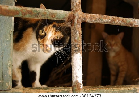 Evil look of cat hiding in a cellar - stock photo