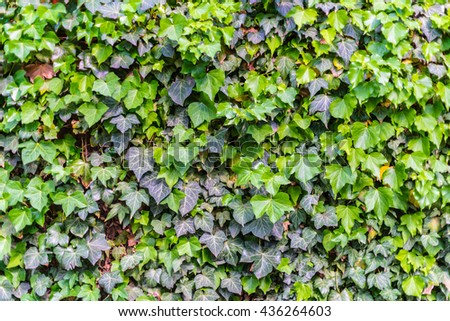 excellent green leaf vegetation background with orange red leafs in between. scenic, natural candid, strong rich color impressive nature experience relief