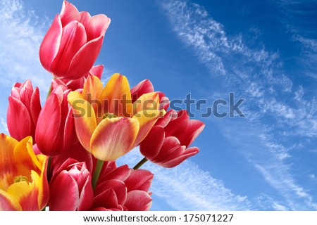Excellent spring flowers on background of blue sky