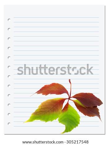 Exercise book with multicolor virginia creeper leaf (Parthenocissus quinquefolia foliage). Back to school background - stock photo