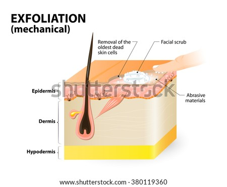 Exfoliation. mechanical means. cosmetology. Cross-section of a skin layers.