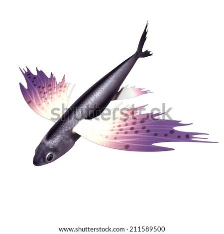 Exocoetus (flying fish) - stock photo