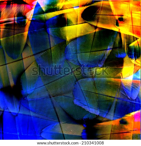 Exotic Background Texture made of Beautiful Scarlet Macaw bird's feathers - stock photo