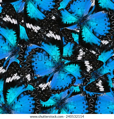 Exotic Blue Background Textured from Leopard Lacewing Butterflies in the best design - stock photo