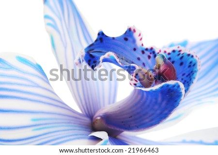 exotic blue orchid - stock photo